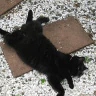 Pet sitter for cat and for 12 days from end of June.