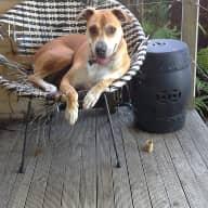 Seeking dogsitter in Marrickville NSW