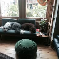 Pet sitter/house sitter needed for 2 lovely dogs Brighton