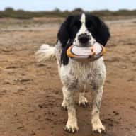 We welcome sitters that love dogs and cats and would enjoy taking our gentle springer spaniel 'Toby ' for lovely walks and looking after our two cats Finn and Django.