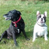 Petsitter for two dogs and cat in beautiful Cotswolds...