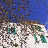 A pet loving  person or couple who would love to stay in a pretty Greek village house on the island of Lesvos