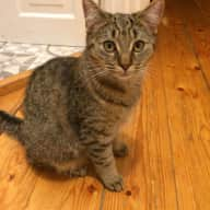 Sitter needed for friendly young cat in London
