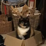 Occasional cat/house-sitter needed