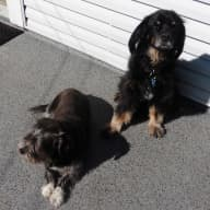 Looking for a pet lover for my 2 dogs and a senior cat