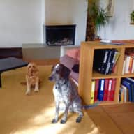 Loving and responsable pet and housesitter required for our 2 dogs Bonnie and Tom in Lausanne, Switzerland
