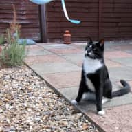 UK based cat loving house-sitter required to look after our house and cat