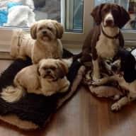 Scottish Borders House & Pet Sit