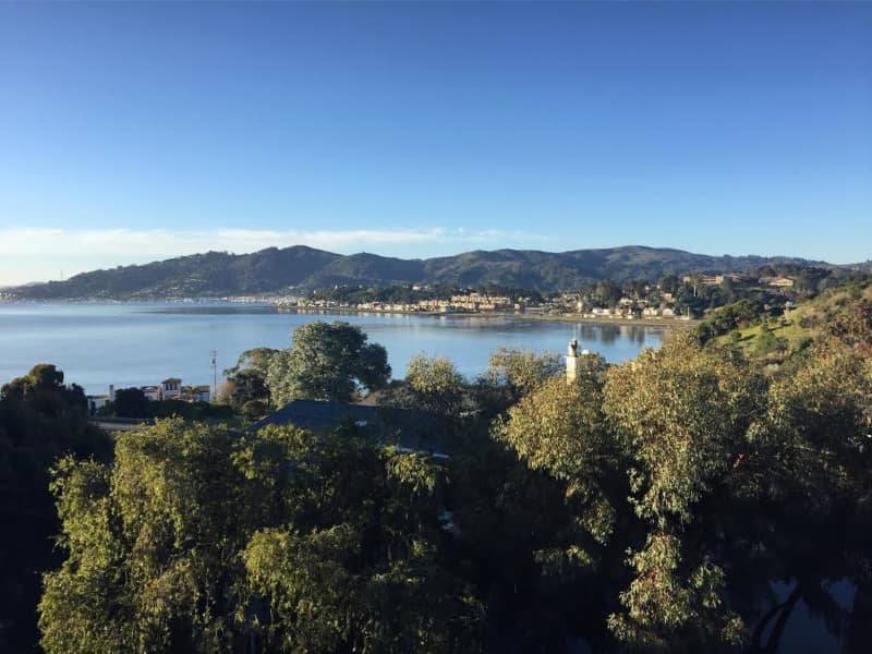 Housesitting assignment in Tiburon, California, United States