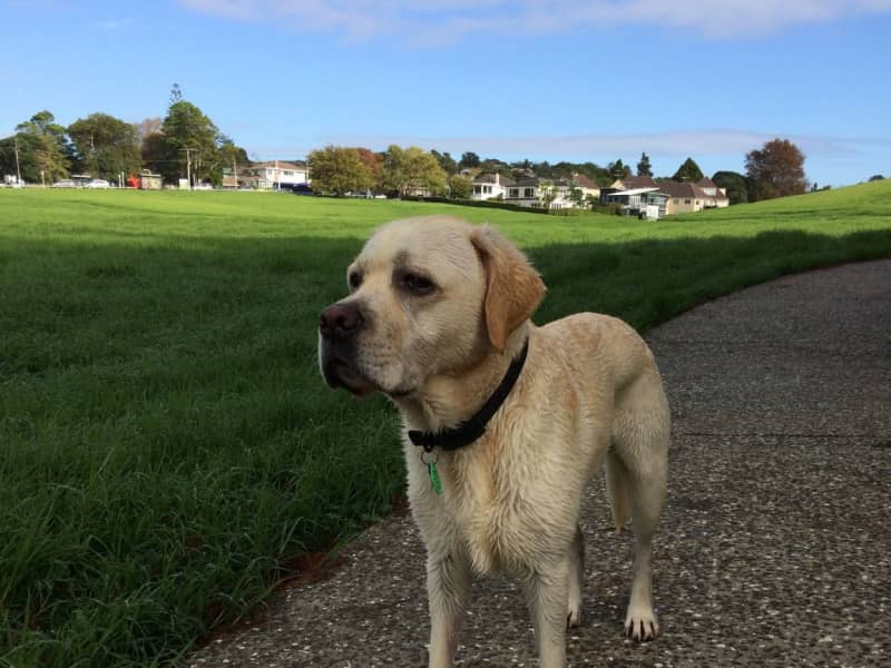 Housesitting assignment in Glendowie, New Zealand