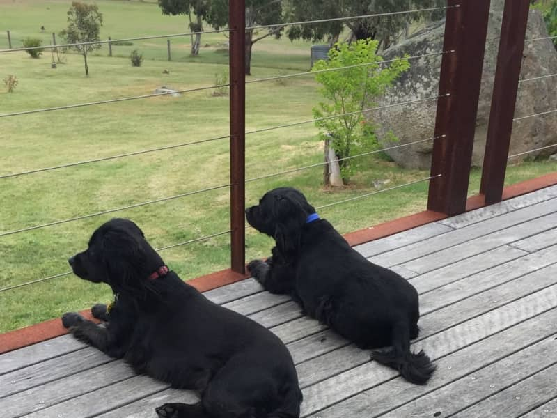 Housesitting assignment in Kyneton, Victoria, Australia