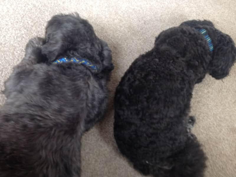 Housesitting assignment in Attleborough, United Kingdom