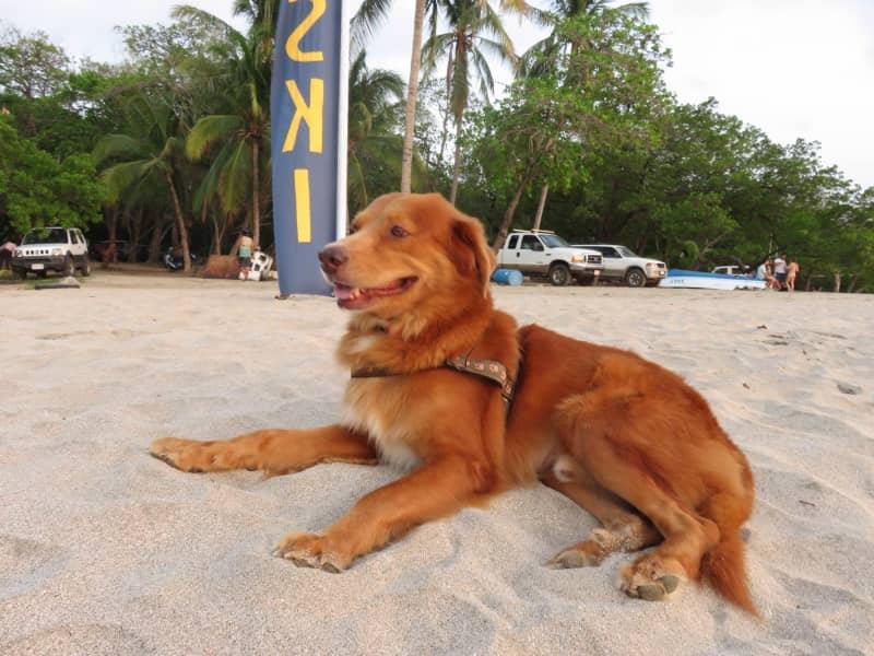 Housesitting assignment in Tamarindo, Costa Rica