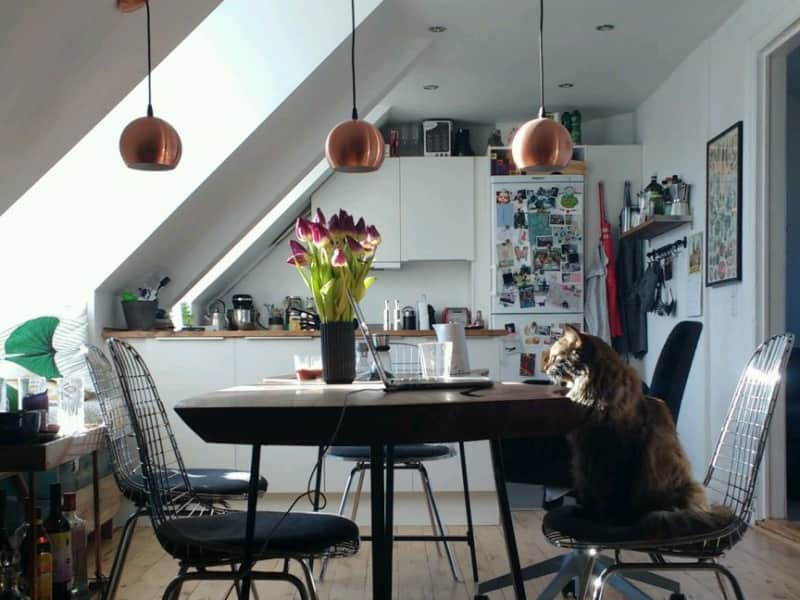 Housesitting assignment in Copenhagen, Denmark