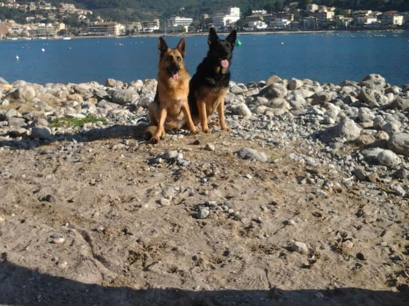 Housesitting assignment in Sóller, Spain