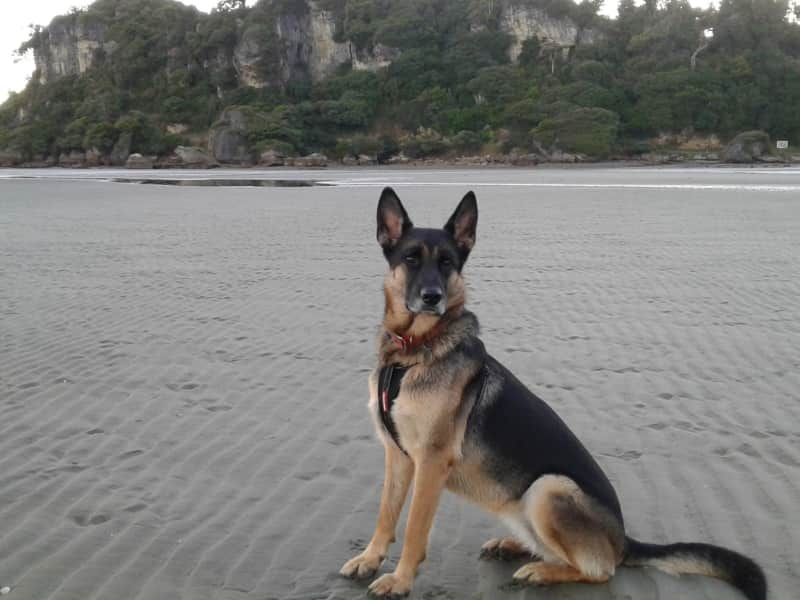 Housesitting assignment in Takaka, New Zealand