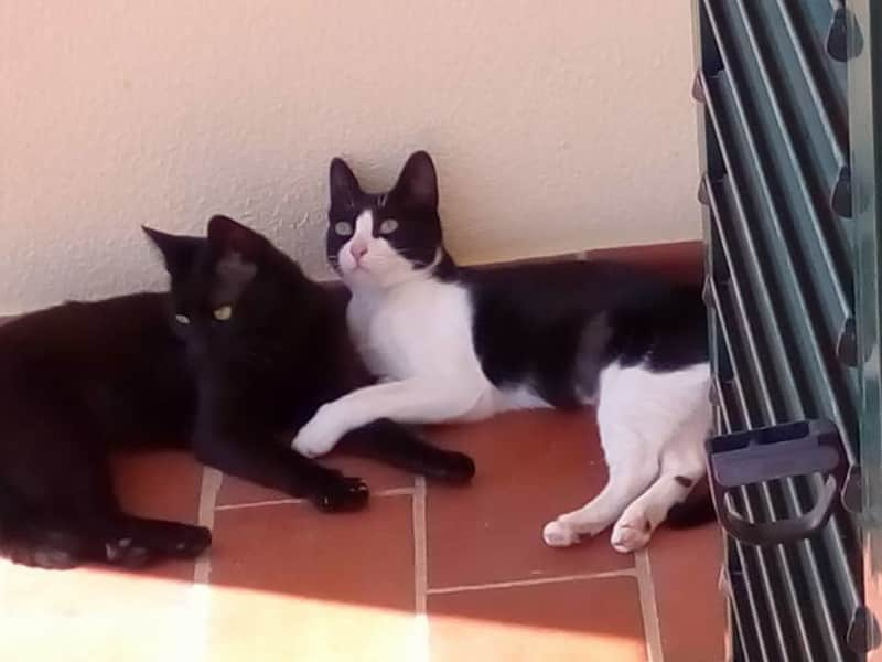 Housesitting assignment in Torres Vedras, Portugal