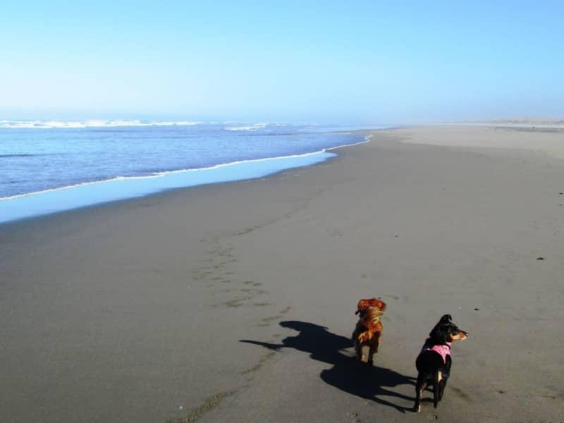 Housesitting assignment in Nahcotta, Ocean Park, Washington, United States