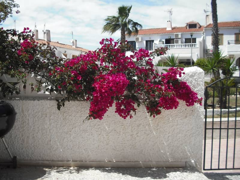 Housesitting assignment in Torrevieja, Spain