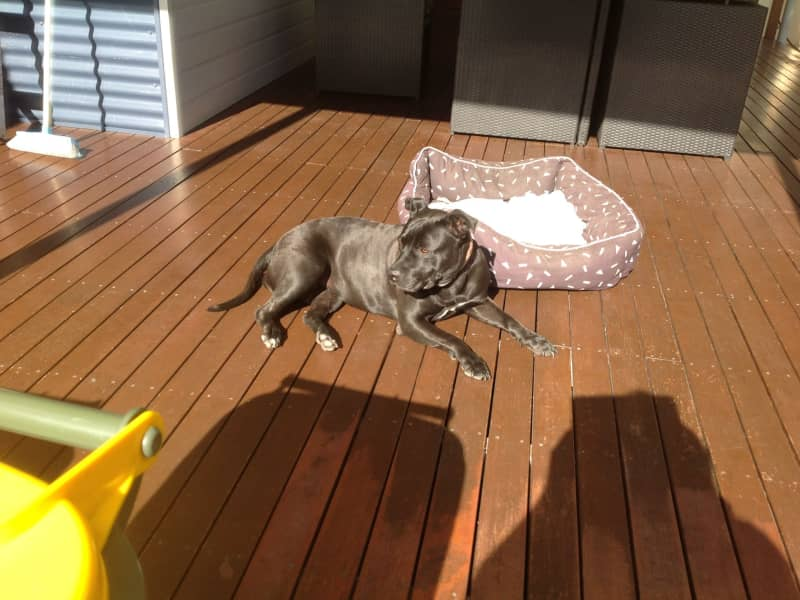 Housesitting assignment in Berkeley Vale, New South Wales, Australia