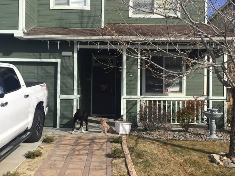 Housesitting assignment in Reno, Nevada, United States