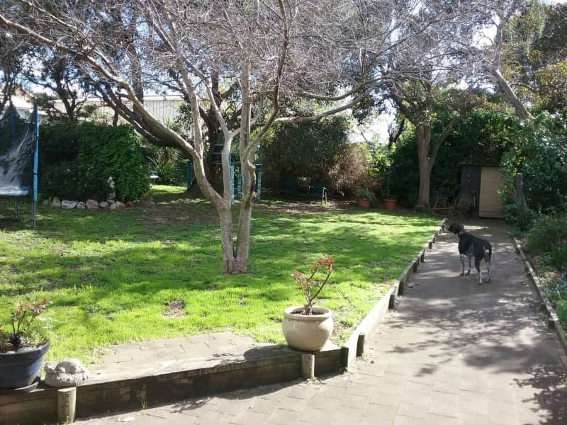 Housesitting assignment in Adelaide, South Australia, Australia