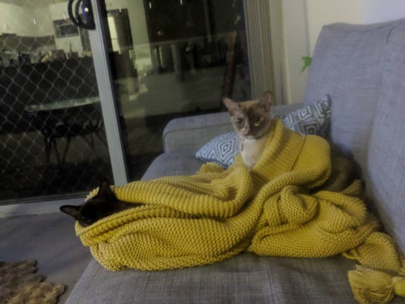 Housesitting assignment in Kenmore, Queensland, Australia