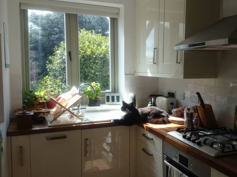Housesitting assignment in Sheffield, United Kingdom