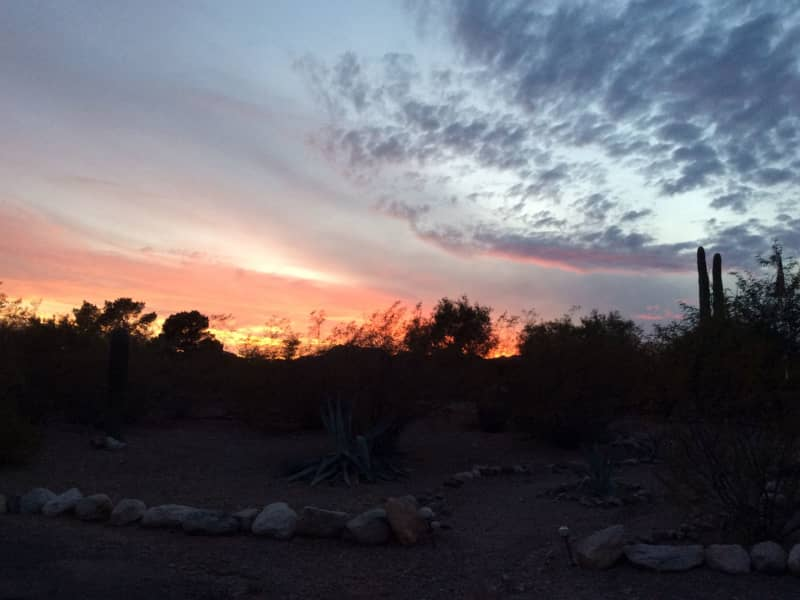 Housesitting assignment in Tucson, Arizona, United States