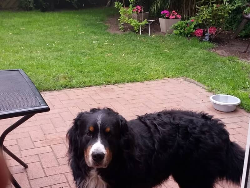 Housesitting assignment in Oldenburg, Germany