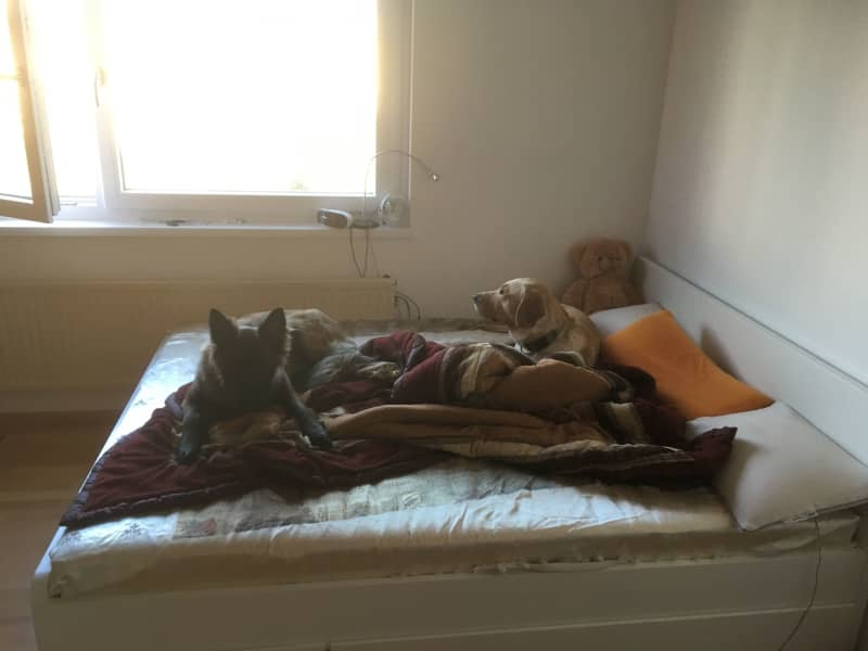 Housesitting assignment in Vienna, Austria