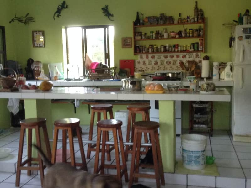 Housesitting assignment in Tulum, Mexico