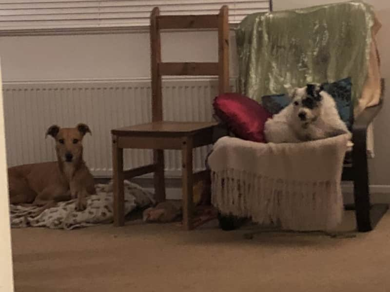 Housesitting assignment in Braunton, United Kingdom