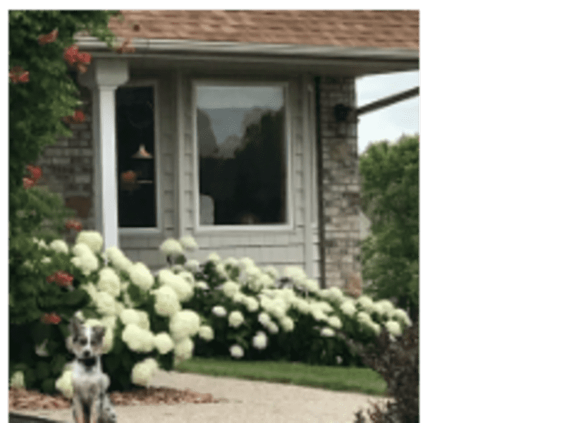 Housesitting assignment in Apple Valley, Minnesota, United States
