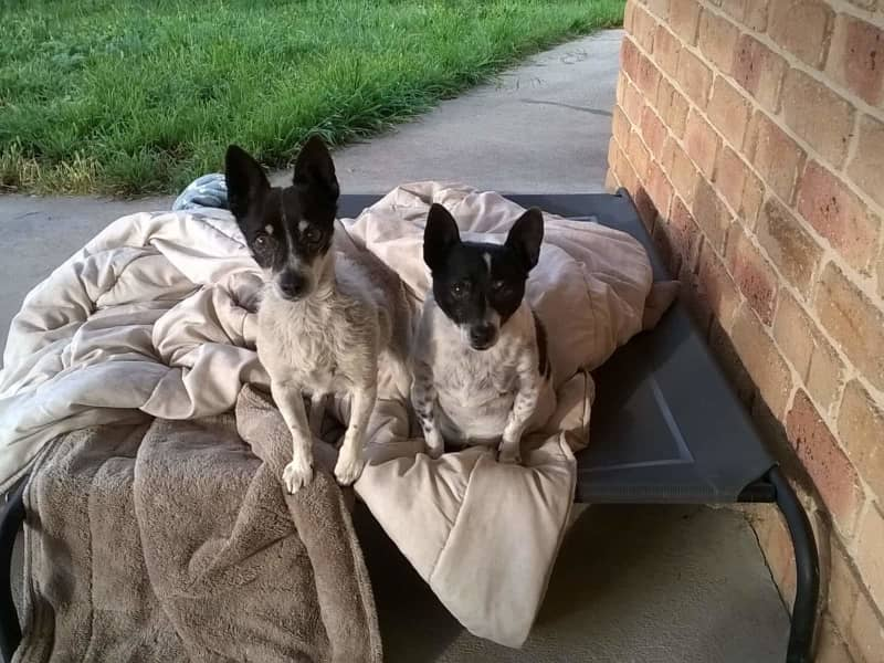 Housesitting assignment in Bathurst, New South Wales, Australia