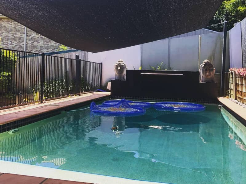 Housesitting assignment in Eatons Hill, Queensland, Australia