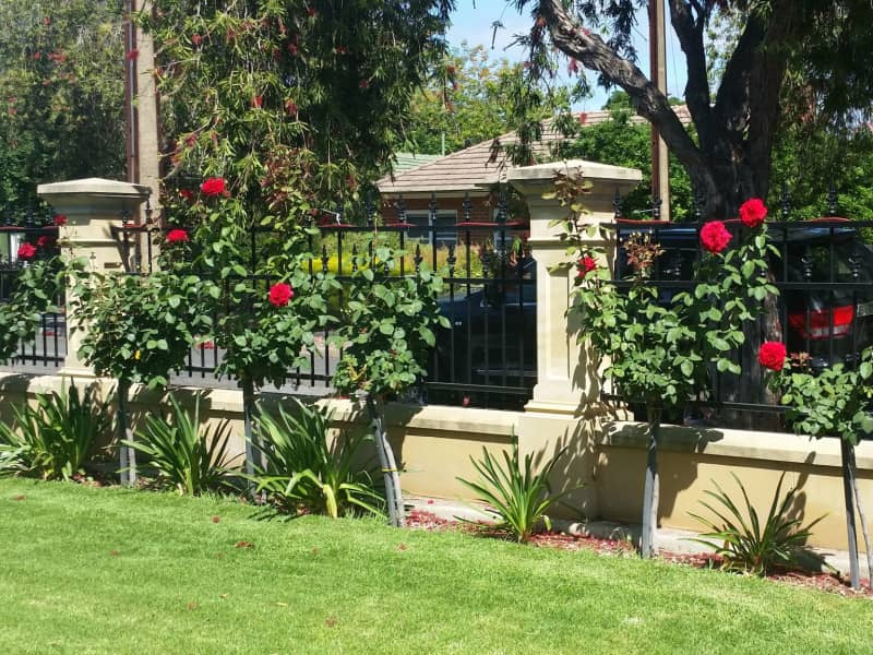 Housesitting assignment in Melrose Park, South Australia, Australia
