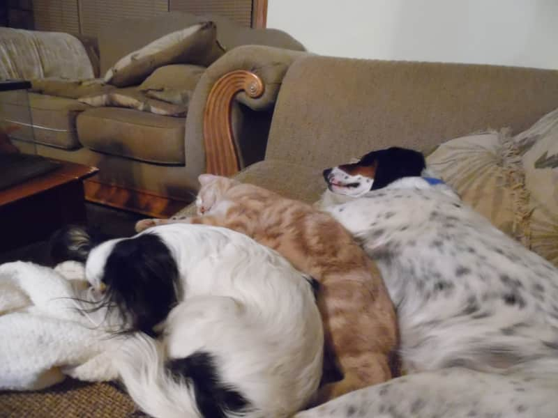 Housesitting assignment in Keenesburg, Colorado, United States