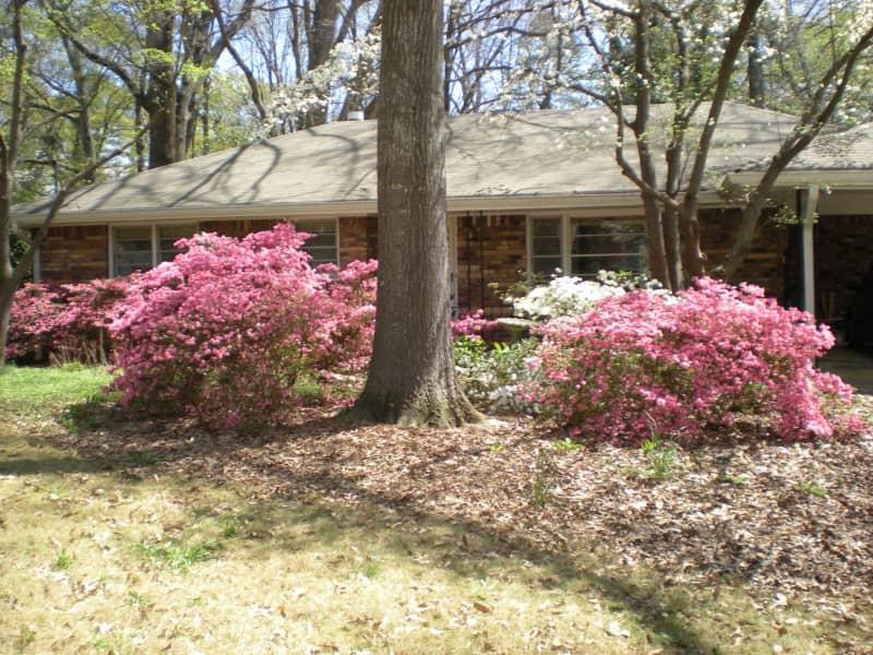 Housesitting assignment in Decatur, Georgia, United States