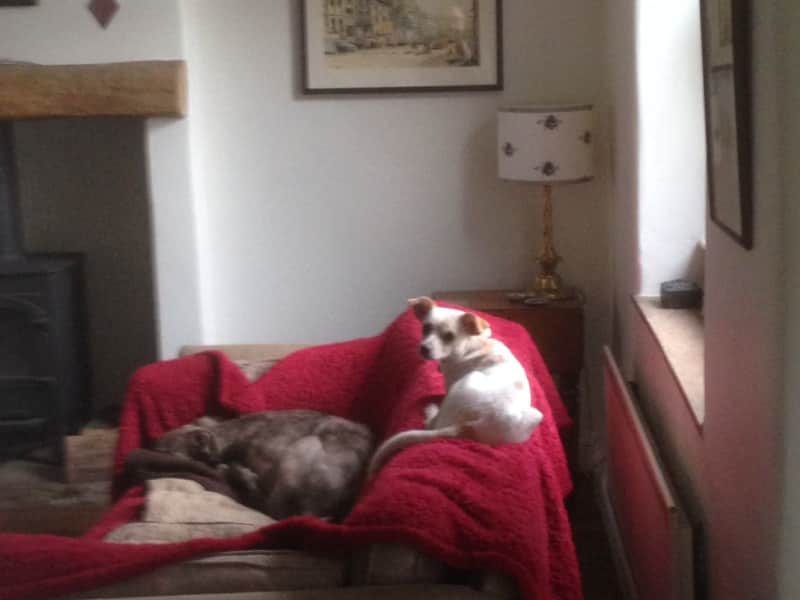 Housesitting assignment in Addingham, United Kingdom