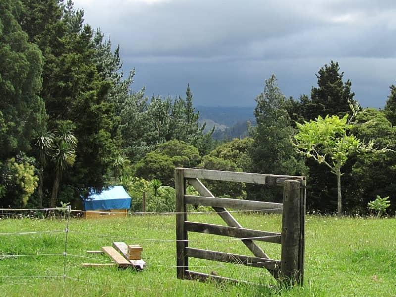 Housesitting assignment in Kaeo, New Zealand