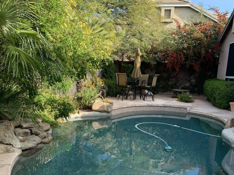 Housesitting assignment in Phoenix, Arizona, United States