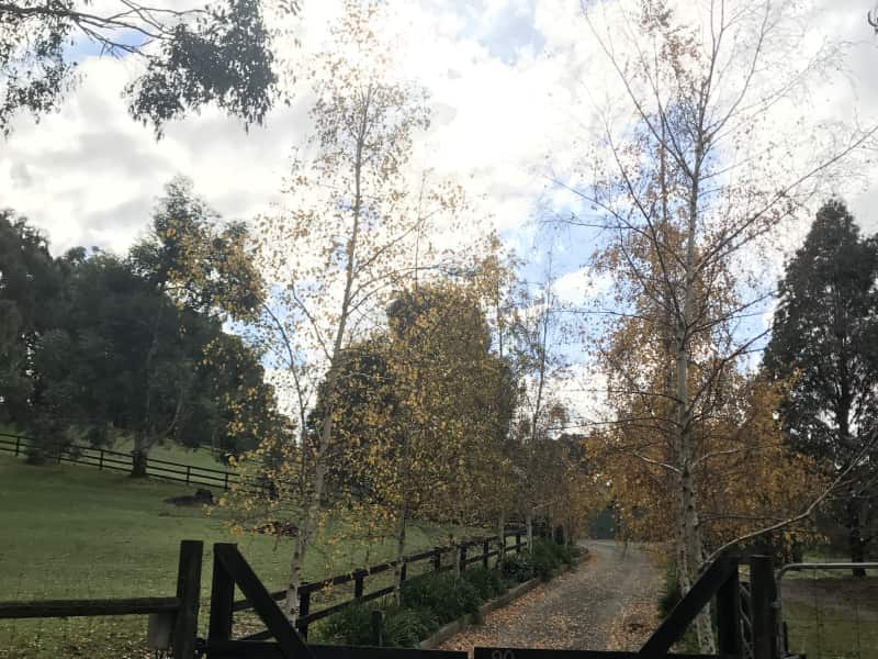 Housesitting assignment in Maryknoll, Victoria, Australia