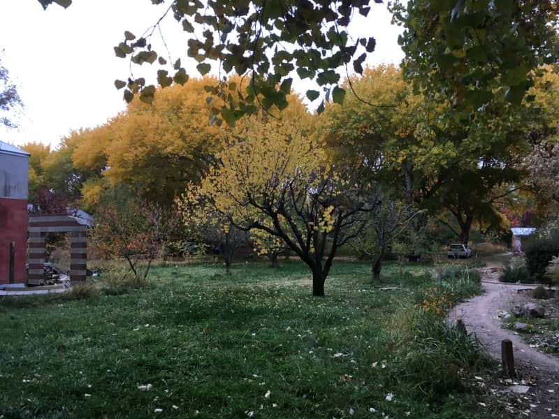 Housesitting assignment in Albuquerque, New Mexico, United States