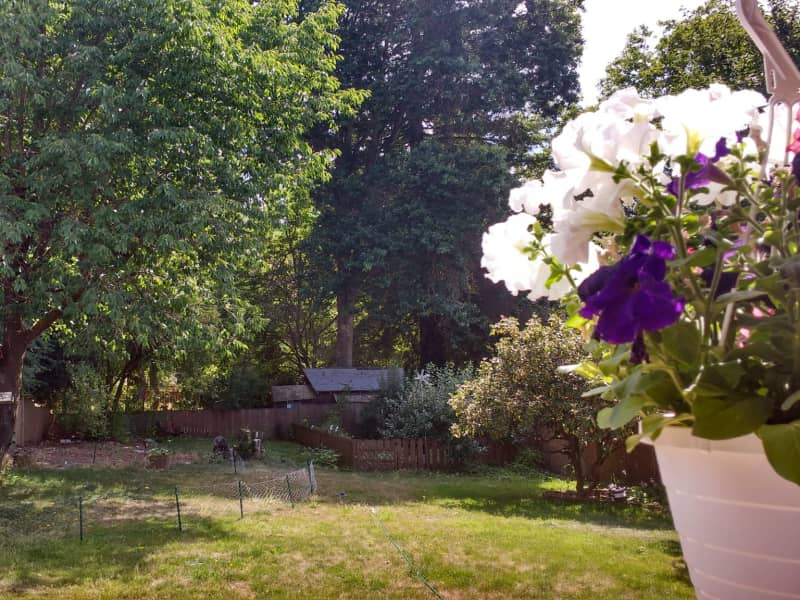 Housesitting assignment in Camas, Washington, United States