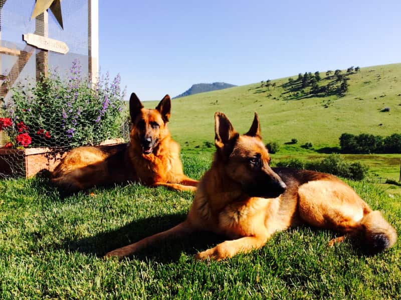 Housesitting assignment in Golden, Colorado, United States