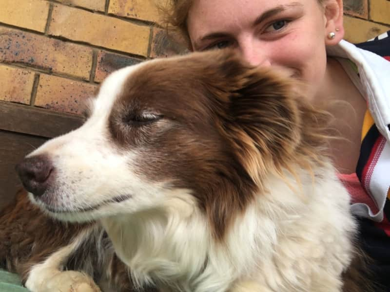 Housesitting assignment in Withcott, Queensland, Australia