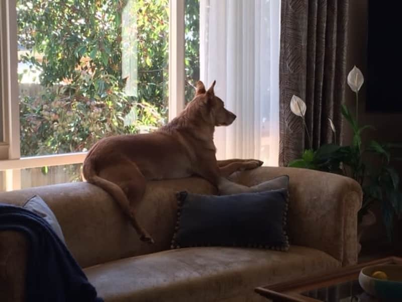 Housesitting assignment in Clifton Springs, Victoria, Australia