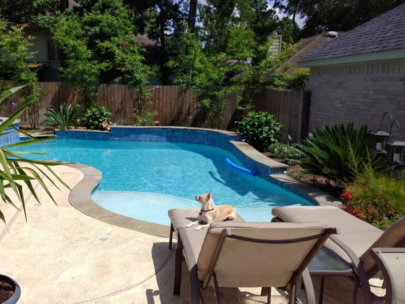 Housesitting assignment in The Woodlands, Texas, United States