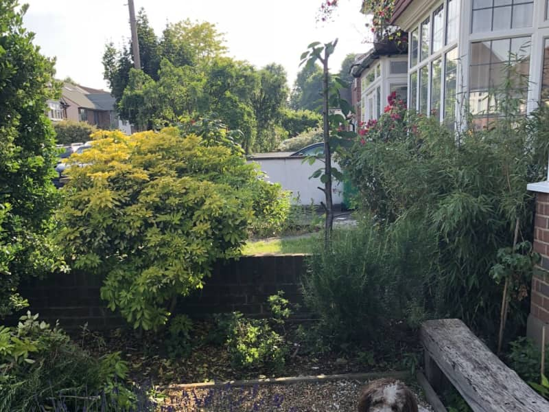 Housesitting assignment in Strawberry Hill, United Kingdom